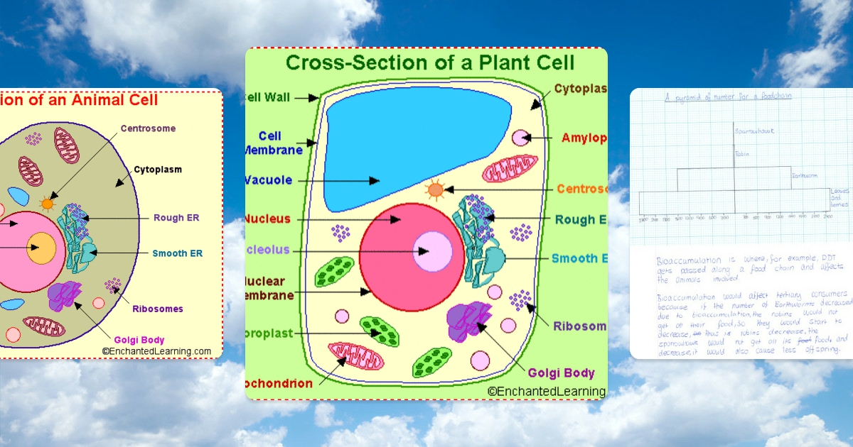 animal and plant cell conclusion